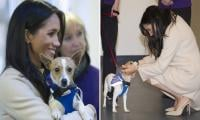 Meghan Markle sponsors a dog kennel in Archie's name at royal patronage