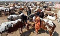 NCOC finalises SOPs for cattle markets ahead of Eid-ul-Azha