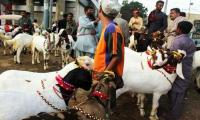 Sindh allows cattle markets to be set up ahead of Eid-ul-Azha
