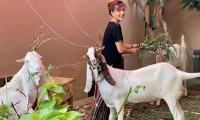 Mehwish Hayat says she is missing her 'little goat farm'