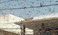 NLCC says locust attack threat from India, Africa persists