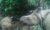 Two endangered Javan rhino calves found in Indonesian park