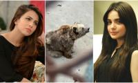 Armeena Khan, Ushna Shah call for a ban on zoos after bear in Karachi goes viral