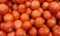 Hyderabad farmers destroy crops in protest of govt's decision to import tomatoes