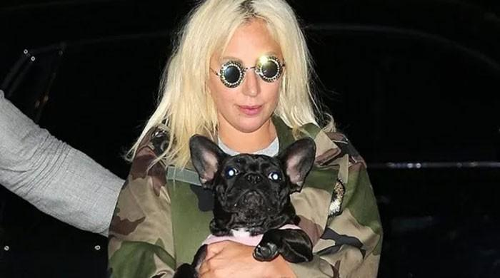 Lady Gaga at ease after stolen pet dogs return unharmed