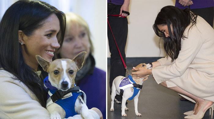 Meghan Markle thanks animal lovers for supporting pet charity close to her heart