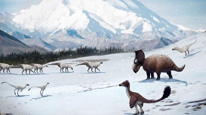 Chill life: Dinosaurs thrived in the ancient Arctic