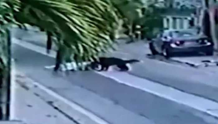 Screengrab from the video of Karachi man attacked by pet dogs.