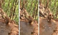 Video of a monkey giving bath to its baby goes viral
